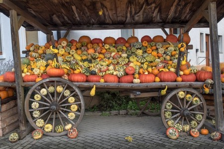 pumpkins-504104_640
