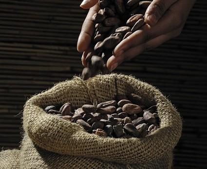 cocoa-beans-499970_640
