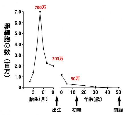 生まれる前からの女性が持っている卵子の数と年齢との関係を表すグラフ