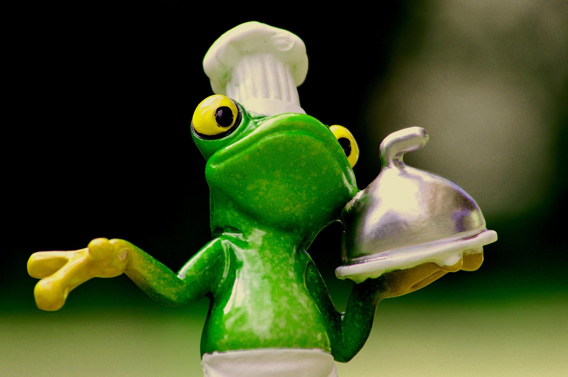 frog-1254650_1920